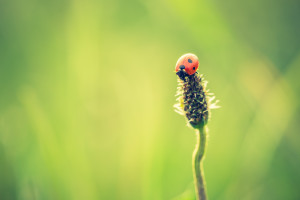 Beautiful vintage photo of ladybug